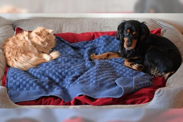 Infoblatt wirbt für Miteinander bei der Hundehaltung