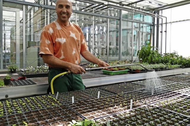 Kunterbunter Pflanzenkindergarten