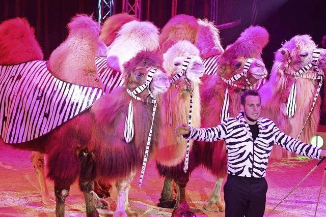 Bis Ostermontag gastiert der Circus Paul Busch in Freiburg