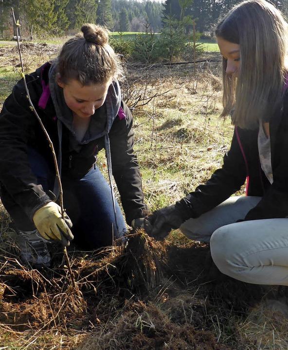 240 junge Bäume wurden gepflanzt.  | Foto: Sven Kucher