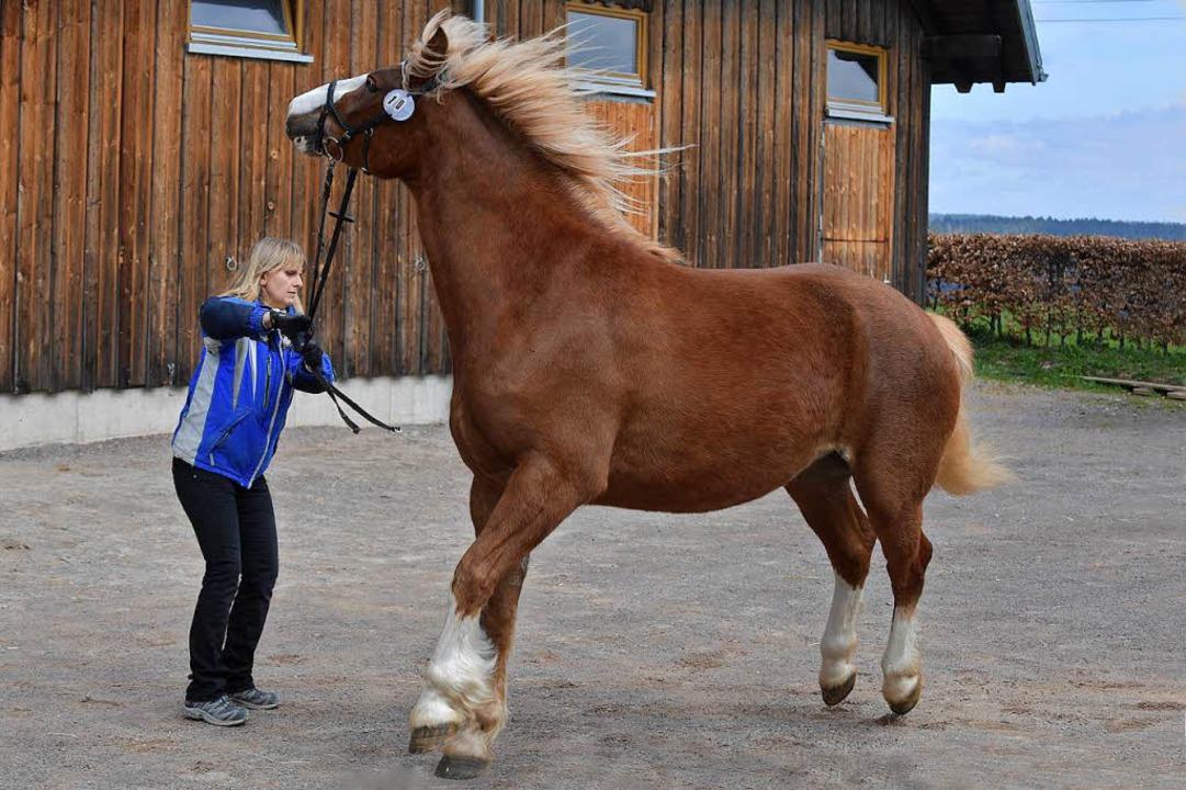 Elena zeigt Temperament - kein Problem...t. Märgen hat die Zügel fest im Griff.  | Foto: Wolfgang Scheu