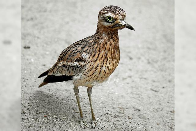 (Vorerst) keine Stellungnahme zu Vogelschutzgebiet