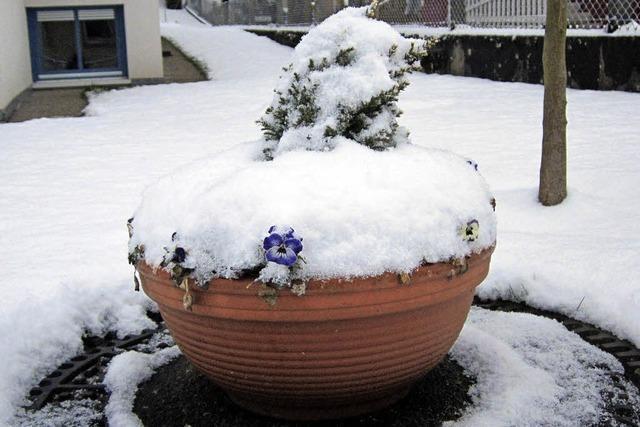 Weihnachten im Klee, Ostern im Schnee?