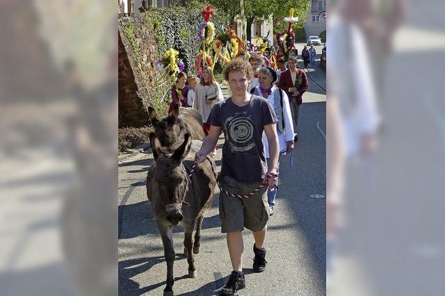 Esel führen die Prozession an