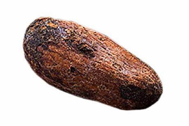 Bauern leiden unter Preissturz am Kakaomarkt
