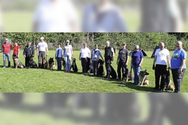 Beste Bedingungen bei der Frühjahrsprüfung des Hundevereins