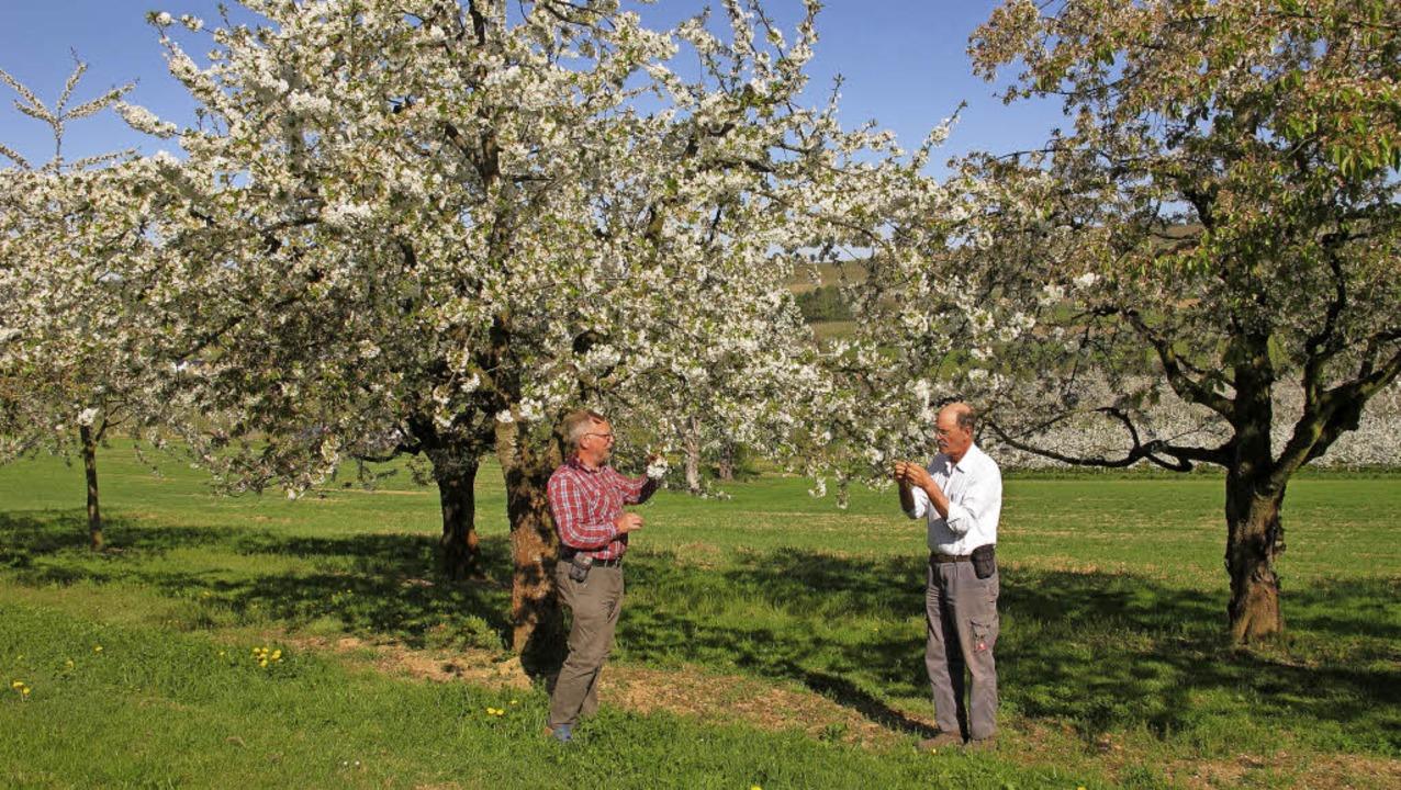 Helmut Häfelinger (rechts) und Wolfgan... wissen, ob einige Bäume Paten finden.  | Foto: Jutta Schütz