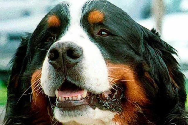 Nach tödlicher Hunde-Attacke: Stadt erlässt Haltungsverbot