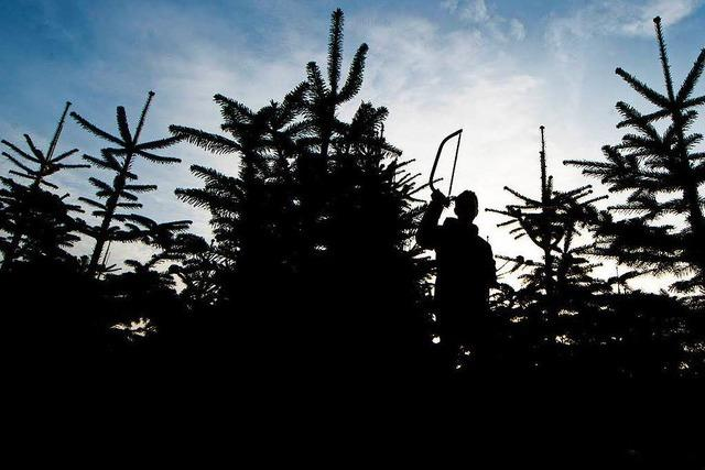 Unbekannte kappen Spitzen von 600 Weihnachtsbäumen