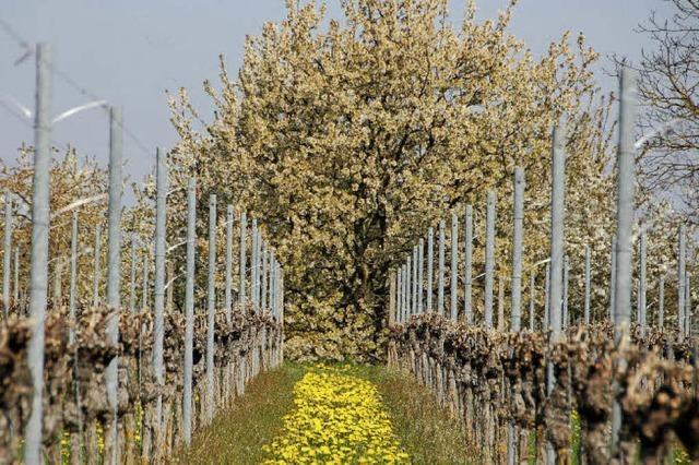 Weinmesse in Offenburg: Baden misst sich mit der Provence