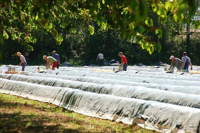 IG Bau klärt Erntehelfer über Mindestlohn auf