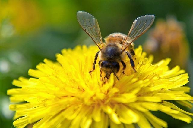 Viele Bienenvölker haben den Winter nicht überlebt
