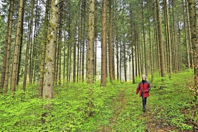 Beim Wald geht die Stadt eigene Wege