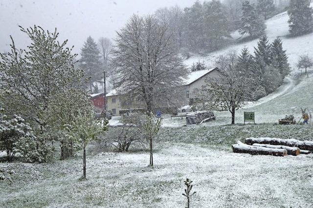 Kinder, Kinder, noch einmal zuckt der Winter
