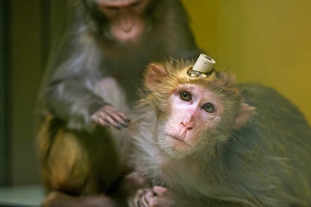 Tübinger Institut stellt Tierversuche ein