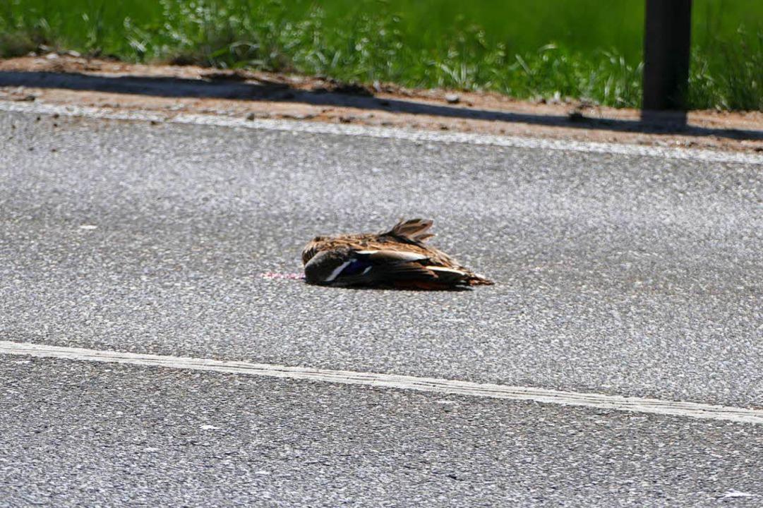 Die Entenmutter wurde totgefahren.    Foto: Ralf H. Dorweiler