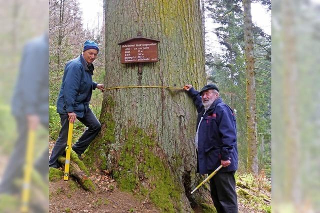 Mehr Holz im Gemeindewald