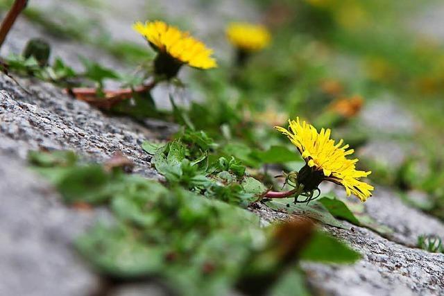 8 Pflanzen, die sich in der Innenstadt behaupten