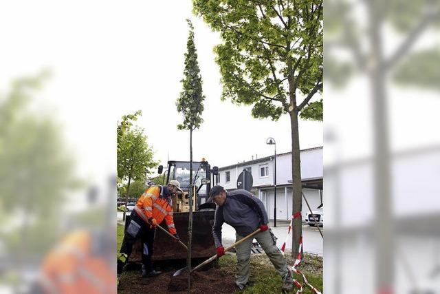 Neue Bäume, neue Parkplätze