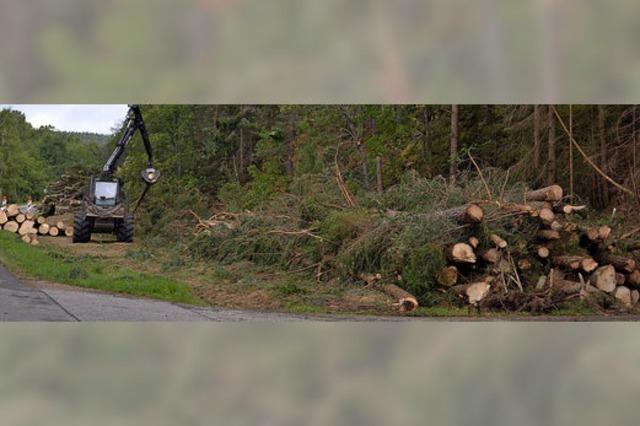Holzverkauf muss neu geregelt werden