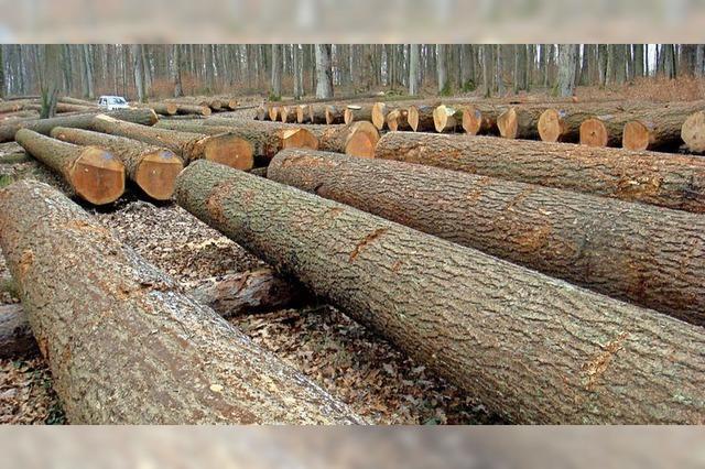 Anteil von Douglasien im Bugginger Forst wird erhöht