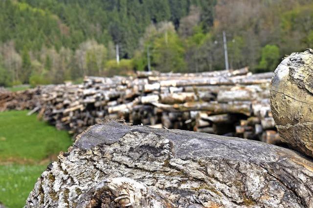 Holz bis an den Horizont