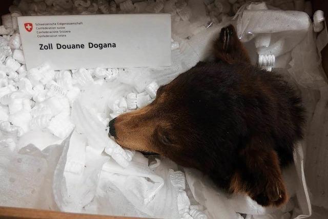 Zoll findet ausgestopfte Braunbären in Frachtsendung
