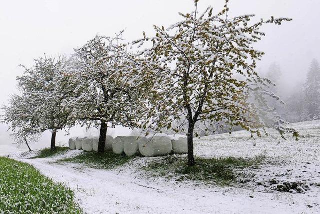 Winterfrühling im Wiesental