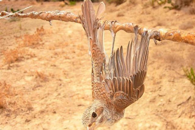 Grausame Jagd auf Zugvögel in Zypern