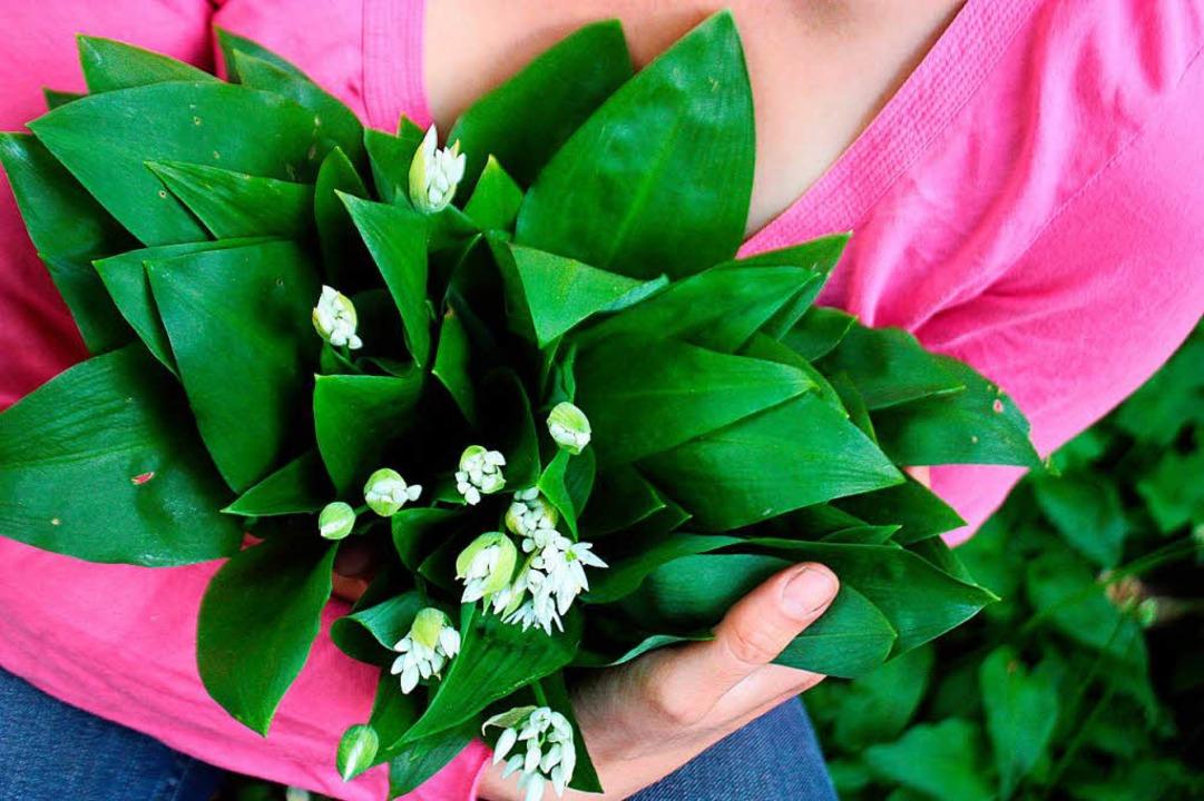 Bärlauch in fortgeschrittenem Blütesta...n von Maiglöckchen verwechselt werden.  | Foto: dpa-tmn