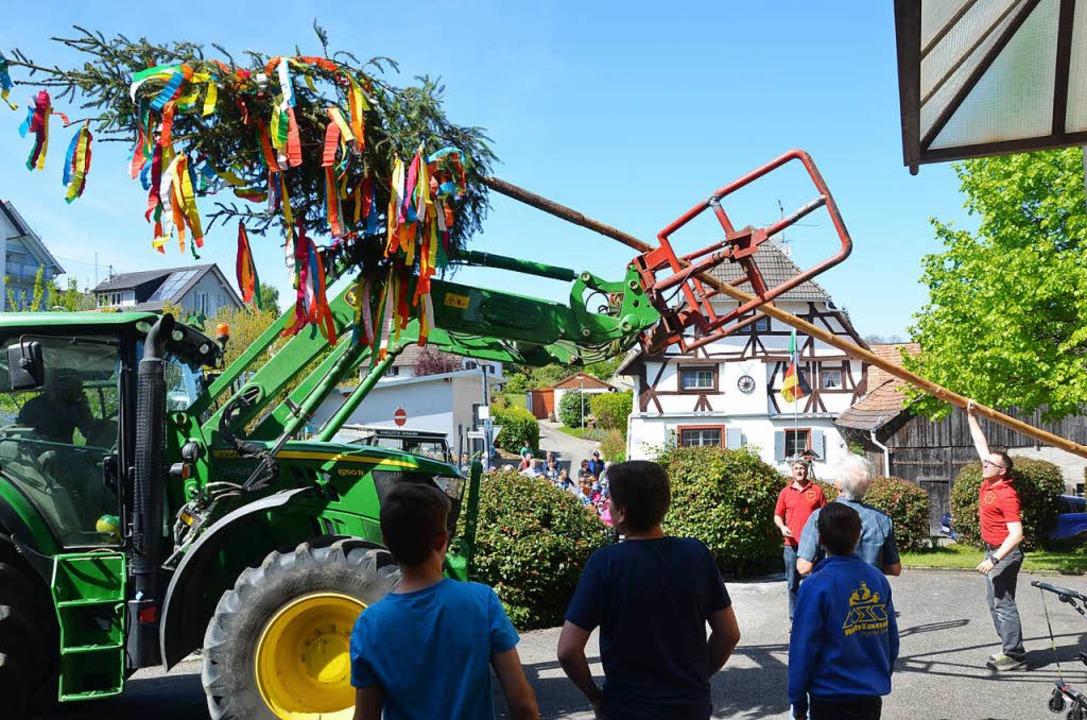 Maibaumstellen in Blansingen  | Foto: Marco schopferer