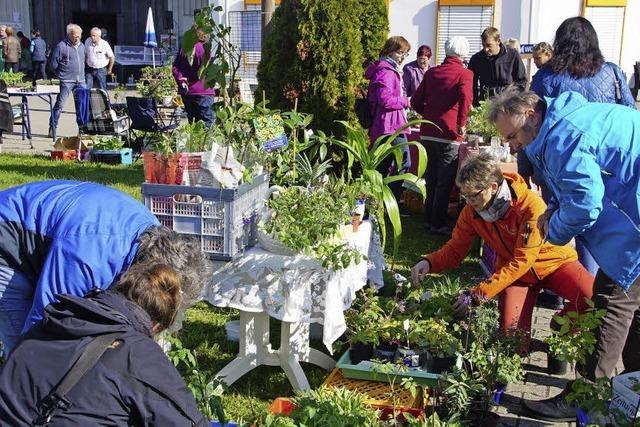 Pflanzenbörse bietet reiche Auswahl