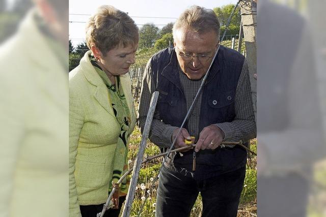 Staatssekretärin Gerlinde Gurr-Hirsch begutachtete die Frostschäden der Reben in Feldberg