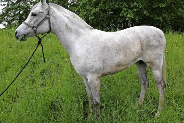 Herrenloses Pferd in Kehl / Frau will mit Gasbrenner Unkraut bekämpfen und setzt Scheune in Brand