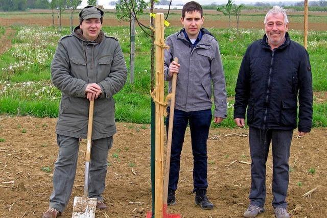 528 Bäume gepflanzt