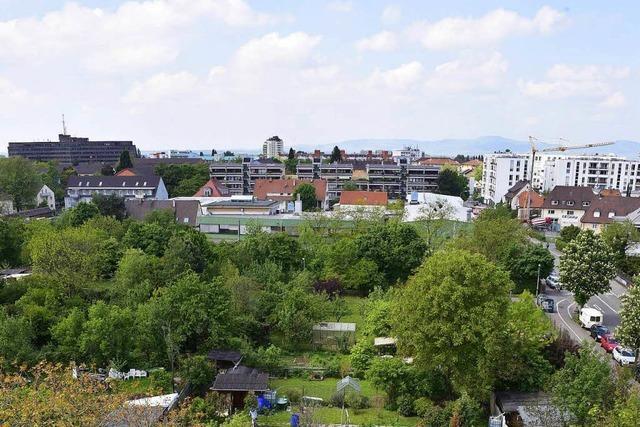 Kleingartenfläche im Stühlinger soll kompakt bebaut werden