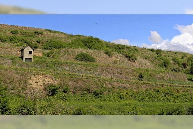 Landsiedlung soll Steillage pflegen