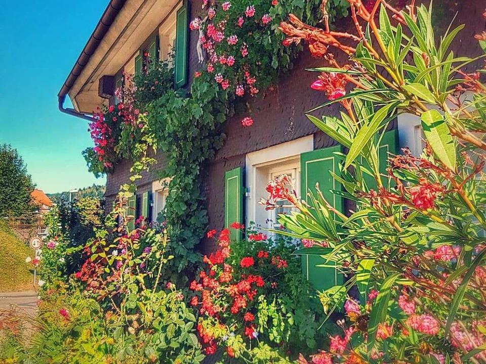Im Farbrausch: Blumenpracht an einem Bauernhaus in Bleibach    | Foto: Petra Kistler