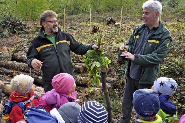 Jubiläumsaktion der Stadtwerke Müllheim-Staufen: Kinder pflanzen Eichen