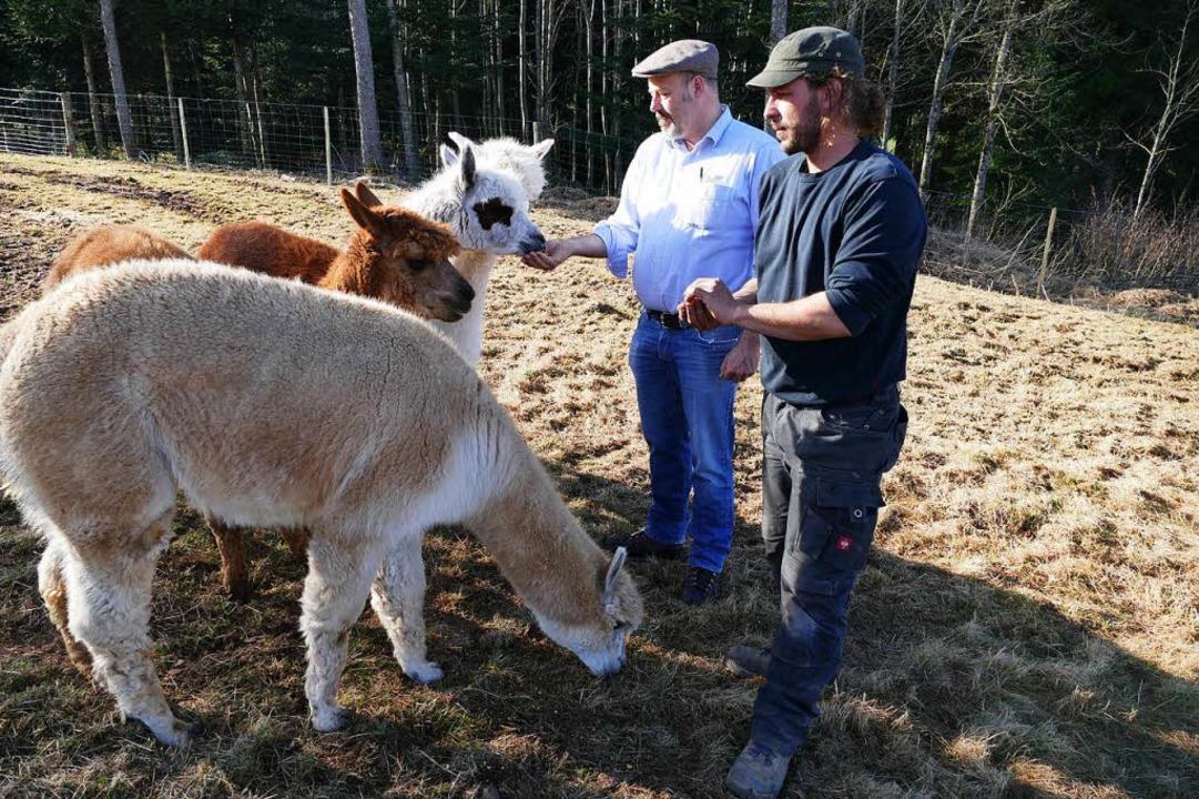 Leckerli für die Alpakas: Daniel Götte...Matteo Tartari beim Füttern der Tiere.  | Foto: Tanja Bury