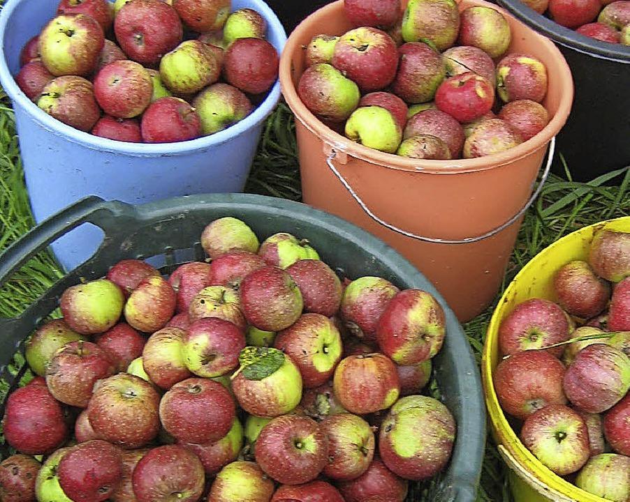 POM sammelt Äpfel und kümmert sich so um Streuobstwiesen in der Region.  | Foto: Privat