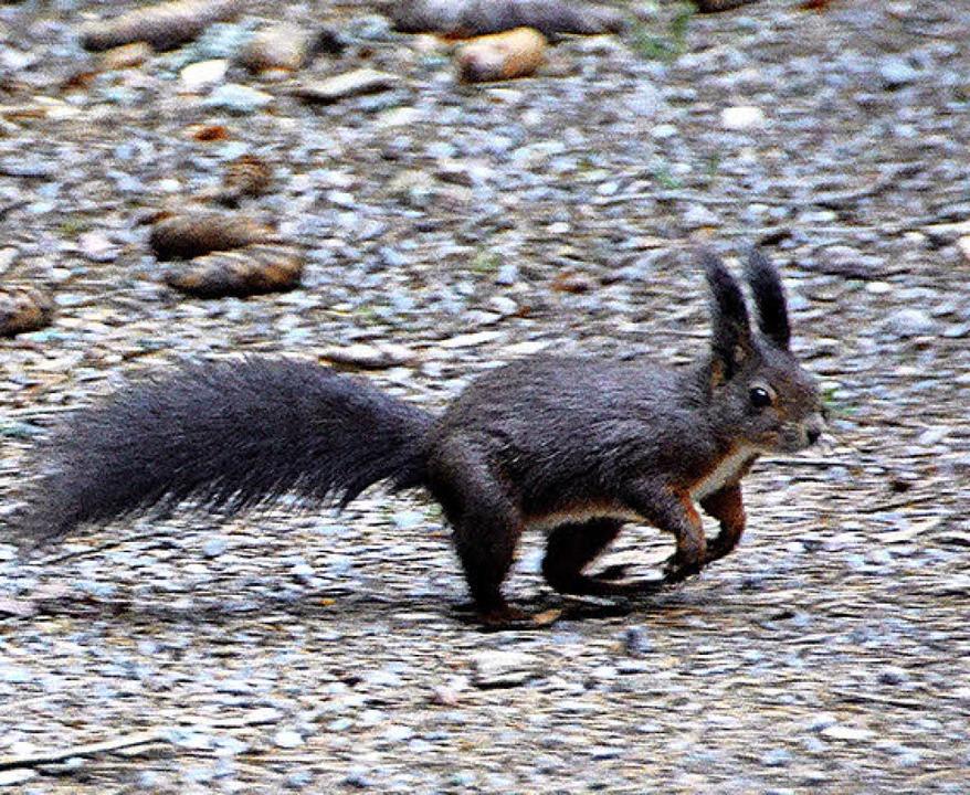 Ertappt: ein Eichhörnchen    Foto: Kathrin Blum