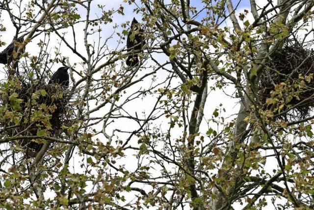 Am Wochenende ist wieder Vögelzählen angesagt