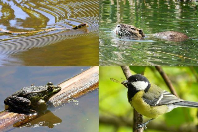 Erfreuliche Artenvielfalt im Staufener Biotop Nunnenmacher Teiche