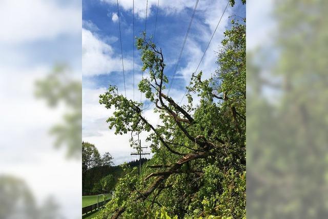 Baum stürzt in Freileitung