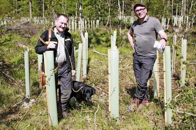 Mintgrüne Rohre dienen als Kinderstube für Bäume