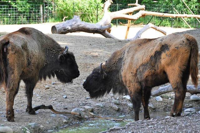 Der Tierpark lange Erlen in Basel wächst