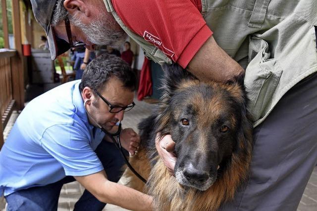 24 Vierbeiner lassen sich beim Hundesportverein impfen