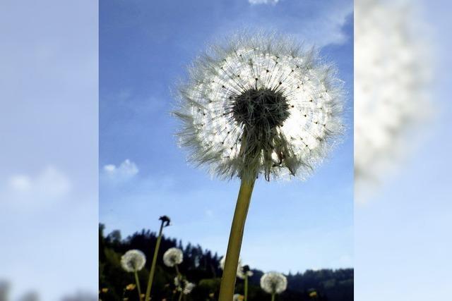 Es blüht und fliegt in der Natur