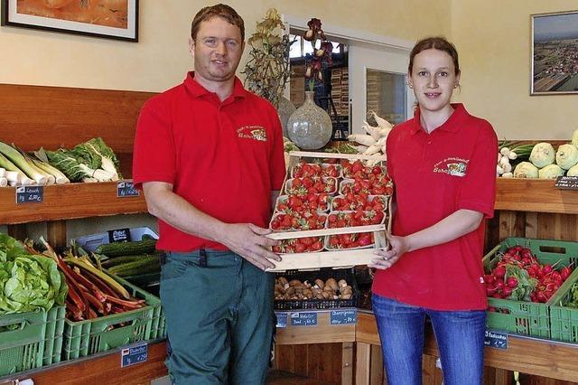 Gesundes Obst und Gemüse frisch vom Feld